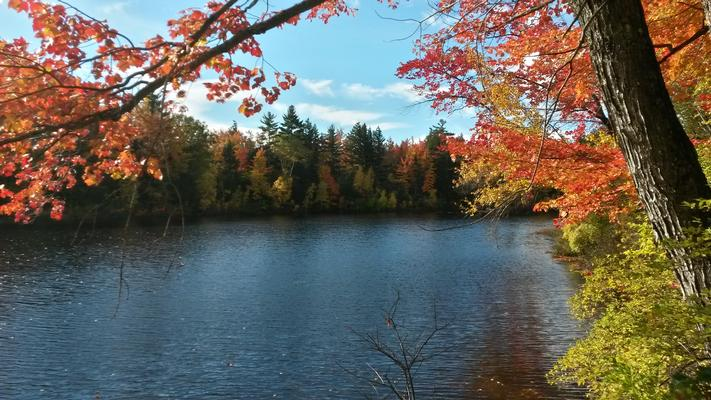 Pequawket Pond shore on-site