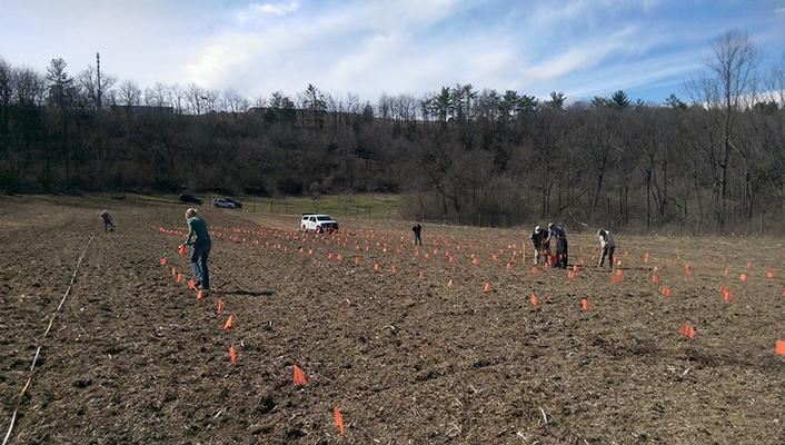 Eastern Cottonwood being planted at the Pennsylvania Gamelands.