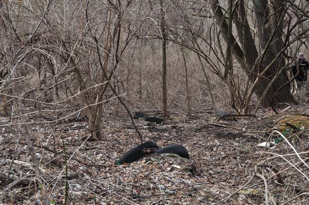 April 2011 - View of tires dumped in wooded area