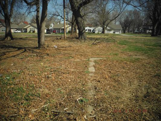 Example of yard before cleanup