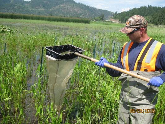 In Lane Marsh, in the Lower Basin, we're testing soil caps to protect water birds.