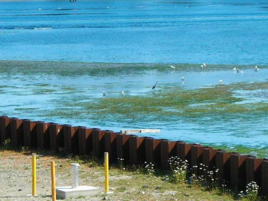 Wyckoff Superfund site containment wall prevents creosote contamination from entering Eagle Harbor and Puget Sound.