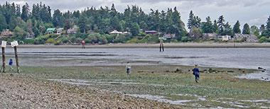 East Beach Low Tide